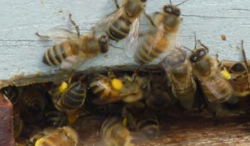 Do your hives have adequate stores?