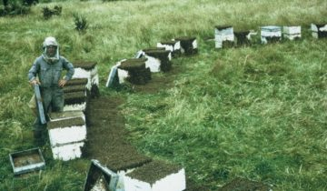 Why are there bees in front of these hives?